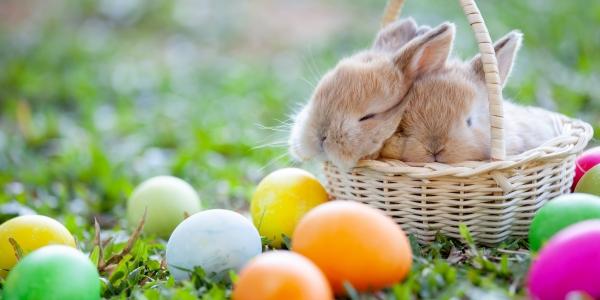 Radosnych Świąt Wielkanocnych !